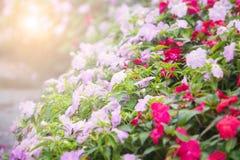 Αφηρημένο λουλούδι πετουνιών θαμπάδων Στοκ εικόνες με δικαίωμα ελεύθερης χρήσης
