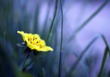 αφηρημένο λουλούδι Στοκ εικόνα με δικαίωμα ελεύθερης χρήσης