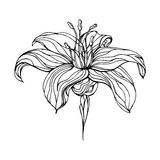 αφηρημένο λουλούδι Στοκ εικόνες με δικαίωμα ελεύθερης χρήσης