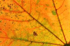 Αφηρημένο πολύχρωμο φύλλο φθινοπώρου Στοκ Φωτογραφίες