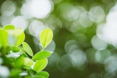 Αφηρημένο πράσινο υπόβαθρο φύσης, πράσινο φύλλο φύσης Στοκ φωτογραφία με δικαίωμα ελεύθερης χρήσης