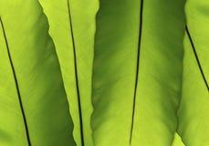 Αφηρημένο πράσινο υπόβαθρο φύλλων Στοκ Εικόνες