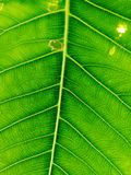 Αφηρημένο πράσινο leaf&#x27 σύσταση του s στοκ εικόνες