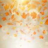 Αφηρημένο πρότυπο εμβλημάτων φθινοπώρου με τα ζωηρόχρωμα φύλλα 10 eps διανυσματική απεικόνιση