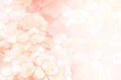 αφηρημένο ροζ λουλουδ&iot Στοκ Εικόνα