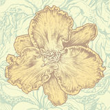 αφηρημένο στοιχείο σχεδίου backgrou floral Στοκ εικόνα με δικαίωμα ελεύθερης χρήσης