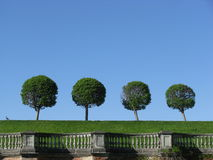 Αφηρημένο τοπίο με τα δέντρα Στοκ Εικόνα