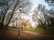 Αφηρημένο τοπίο πάρκων και φύσης από μια χαμηλή γωνία Στοκ Φωτογραφία