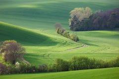 Αφηρημένο τοπίο των ηλιόλουστων λόφων με τους πράσινους τομείς και το άνθος Στοκ φωτογραφίες με δικαίωμα ελεύθερης χρήσης