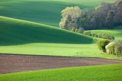 Αφηρημένο τοπίο των ηλιόλουστων λόφων με τους πράσινους τομείς και το άνθος Στοκ Εικόνες