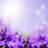 Αφηρημένο υπόβαθρο άνοιξη με τα πορφυρά λουλούδια Στοκ Εικόνες
