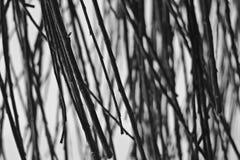 Αφηρημένο υπόβαθρο από το στρώμα του κλάδου σε γραπτό Στοκ Εικόνα