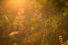 Αφηρημένο υπόβαθρο εγκαταστάσεων λιβαδιών φύσης στενή φύση χλόης ανασκόπησης φθινοπώρου επάνω Πιό πρόσφατο καλοκαίρι Στοκ φωτογραφία με δικαίωμα ελεύθερης χρήσης