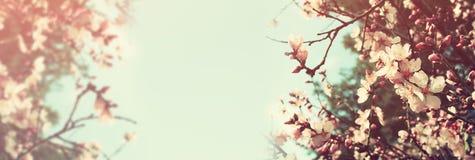 Αφηρημένο υπόβαθρο εμβλημάτων του δέντρου κερασιών Στοκ εικόνες με δικαίωμα ελεύθερης χρήσης