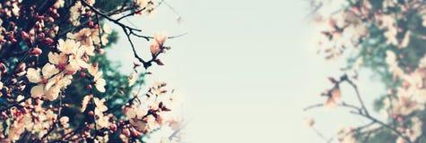 Αφηρημένο υπόβαθρο εμβλημάτων του δέντρου κερασιών Στοκ φωτογραφία με δικαίωμα ελεύθερης χρήσης