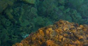 Αφηρημένο υπόβαθρο θερινής θάλασσας φύσης απόθεμα βίντεο