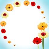 Αφηρημένο υπόβαθρο κύκλων των λουλουδιών gerber Στοκ εικόνες με δικαίωμα ελεύθερης χρήσης
