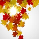 Αφηρημένο υπόβαθρο με τα ζωηρόχρωμα φύλλα φθινοπώρου Ελεύθερη απεικόνιση δικαιώματος