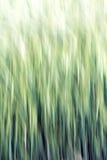 Αφηρημένο υπόβαθρο σιταριού Στοκ φωτογραφία με δικαίωμα ελεύθερης χρήσης
