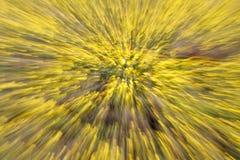 Αφηρημένο υπόβαθρο της φύσης Πυροβολισμός με την αργή ταχύτητα παραθυρόφυλλων κατά τον αλλαγή του εστιακού μήκους φακών Στοκ Εικόνες