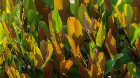 Αφηρημένο υπόβαθρο του φύλλου δύο χρώμα πράσινο και καφετί Στοκ Εικόνα