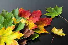 Αφηρημένο υπόβαθρο των διαφορετικά χρωματισμένων φύλλων σφενδάμου Μαγικά χρώματα φθινοπώρου Στοκ Εικόνες
