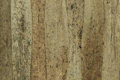 Αφηρημένο υπόβαθρο των καφετιών ξηρών φύλλων καλάμων με τα μαύρα σημεία στοκ εικόνα με δικαίωμα ελεύθερης χρήσης