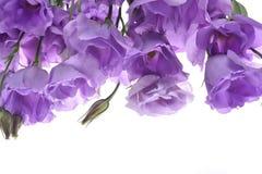 Αφηρημένο υπόβαθρο των πορφυρών λουλουδιών Στοκ Εικόνες