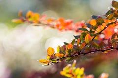Αφηρημένο υπόβαθρο των φύλλων φθινοπώρου στοκ εικόνες