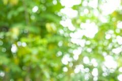 Αφηρημένο υπόβαθρο φύσης δέντρων θαμπάδων bokeh με το φως του ήλιου στο SUMM Στοκ Φωτογραφίες