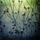 Αφηρημένο υπόβαθρο φύσης με τα άγριες λουλούδια και τις εγκαταστάσεις στοκ φωτογραφίες