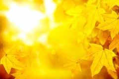 Αφηρημένο υπόβαθρο φύσης φύλλων φθινοπώρου κίτρινο Στοκ Εικόνα