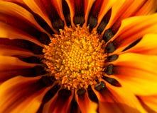 αφηρημένο φάσμα πετάλων λουλουδιών πυρκαγιάς Στοκ Εικόνες