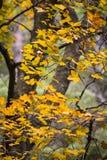 αφηρημένο φθινόπωρο Στοκ Φωτογραφίες