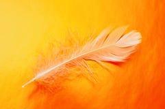 αφηρημένο φτερό Στοκ Φωτογραφίες