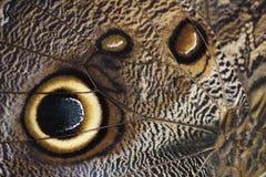 αφηρημένο φτερό caligo ανασκόπησ&e Στοκ Εικόνες