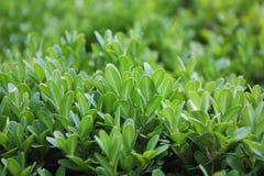 αφηρημένο φυτό ανασκόπησης στοκ εικόνες με δικαίωμα ελεύθερης χρήσης