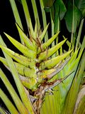 αφηρημένο φυτό στοκ φωτογραφία με δικαίωμα ελεύθερης χρήσης