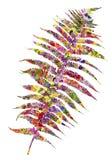 Αφηρημένο φύλλο φτερών που απομονώνεται Στοκ Εικόνες