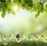 Αφηρημένο .chamomile άνοιξης ή καλοκαιριού λουλούδι θερμότητας Στοκ Εικόνα