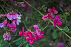 αφηρημένο floral καλοκαίρι ανασκόπησης Στοκ φωτογραφία με δικαίωμα ελεύθερης χρήσης