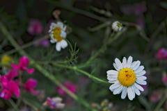 αφηρημένο floral καλοκαίρι ανασκόπησης Στοκ Εικόνες
