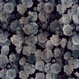 αφηρημένο floral πρότυπο ανασκόπ&e Στοκ Εικόνες