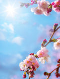 Αφηρημένο floral υπόβαθρο άνοιξη Στοκ εικόνα με δικαίωμα ελεύθερης χρήσης