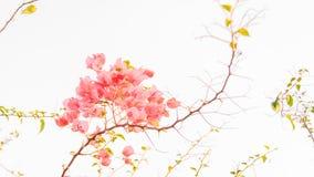 Αφηρημένο floral υπόβαθρο με τα ρόδινα λουλούδια Στοκ εικόνες με δικαίωμα ελεύθερης χρήσης