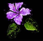 Αφηρημένο hibiscus λουλούδι στο μαύρο υπόβαθρο, απεικόνιση Στοκ φωτογραφίες με δικαίωμα ελεύθερης χρήσης