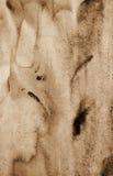 Αφηρημένο watercolor στη σύσταση εγγράφου ως υπόβαθρο Στον τόνο σεπιών Στοκ εικόνα με δικαίωμα ελεύθερης χρήσης