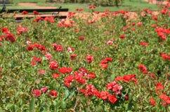 Αφθονία κήπων των λουλουδιών που βρίσκονται κεφάλαιο του Μπουένος Άιρες, Αργεντινή ` s Στοκ Εικόνα