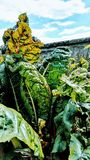 Αφθονία κήπων Στοκ εικόνα με δικαίωμα ελεύθερης χρήσης