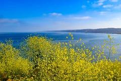 Αφθονία κίτρινου Wildflowers και της ωκεάνιας άποψης Στοκ Εικόνα
